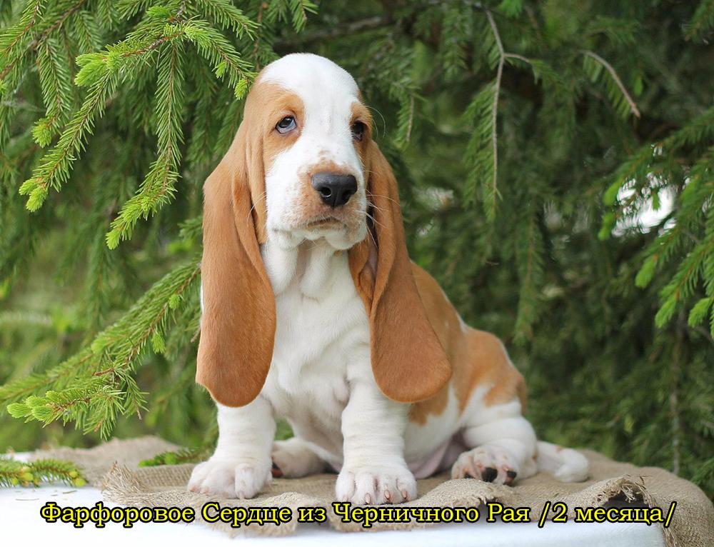 Выставка в петрозаводске собак